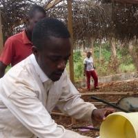 Création d'un champ semencier et de production annuel de 300 000 plants de cacao hybrides et bananier plantains protégés vis-à-vis des phytopathogènes à l'aide de des formulations à bases des poudres de coquilles d'huitres