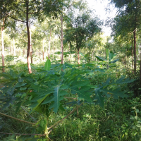Integrated Pest and Disease Management through Agroforestry in Arid and Semi-Arid Environments