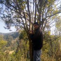 Rejuvenating Citrus: enriching lives in Nepal