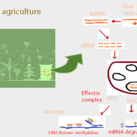 Topical RNA interference (RNAi) in agriculture