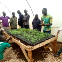 Bio-enhanced healthy seedlings for the management of soil borne diseases in vegetables